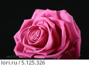Купить «Роза на черном фоне», фото № 5125326, снято 11 января 2008 г. (c) Иван Михайлов / Фотобанк Лори