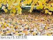 Осень. Стоковое фото, фотограф Сергей Хрушков / Фотобанк Лори