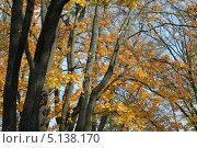 Купить «Осенний парк», эксклюзивное фото № 5138170, снято 9 октября 2013 г. (c) Svet / Фотобанк Лори
