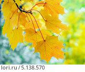 Купить «Осенние листья», фото № 5138570, снято 8 октября 2013 г. (c) Людмила Жмурина / Фотобанк Лори