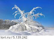 Купить «Заснеженное дерево в сугробе в парке», фото № 5139242, снято 3 марта 2013 г. (c) ElenArt / Фотобанк Лори