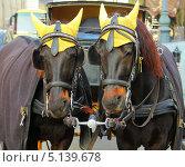 Две лошади в упряжке (2012 год). Стоковое фото, фотограф Наталия Давидович / Фотобанк Лори