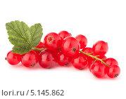 Купить «Красная смородина», фото № 5145862, снято 2 августа 2012 г. (c) Natalja Stotika / Фотобанк Лори