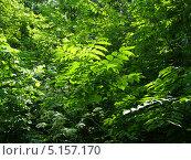 Лес. Стоковое фото, фотограф Константин Левада / Фотобанк Лори