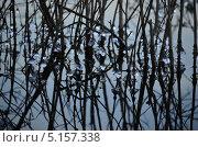 Отражение. Стоковое фото, фотограф Александр Соловьев / Фотобанк Лори