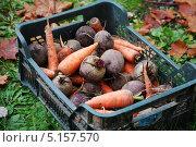 Купить «Овощи», фото № 5157570, снято 3 октября 2013 г. (c) Тавруева Надежда / Фотобанк Лори
