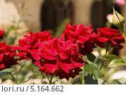 Цветы. Стоковое фото, фотограф Степанова М Е / Фотобанк Лори