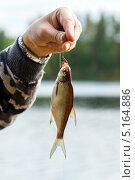 Рыбак с уловом. Стоковое фото, фотограф Антон Журавков / Фотобанк Лори