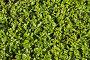 Растительный фон, эксклюзивное фото № 5165430, снято 6 октября 2013 г. (c) Юрий Морозов / Фотобанк Лори