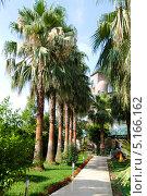 Аллея в тропическом саду. Стоковое фото, фотограф Pavel Kozlovsky / Фотобанк Лори