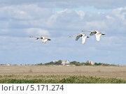 Купить «Молодые лебеди летят над осенней крымской степью», фото № 5171274, снято 24 сентября 2013 г. (c) Елена Ермоленко / Фотобанк Лори