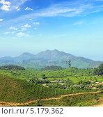 Чайные плантации в горах Индии (2012 год). Стоковое фото, фотограф Михаил Коханчиков / Фотобанк Лори