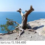 Купить «Пейзаж с высохшим деревцем на скале. Крым», фото № 5184490, снято 16 июля 2013 г. (c) Denis Kh. / Фотобанк Лори