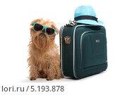 Купить «Собака в солнечных очках рядом с туристическим чемоданом», фото № 5193878, снято 26 сентября 2013 г. (c) Okssi / Фотобанк Лори
