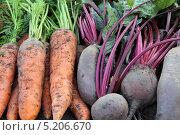 Купить «Морковь и свекла», фото № 5206670, снято 2 октября 2012 г. (c) Марина Орлова / Фотобанк Лори