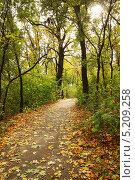 Купить «Осенняя кленовая аллея в лесу с опадающими листьями», фото № 5209258, снято 9 октября 2010 г. (c) Юлия Маливанчук / Фотобанк Лори