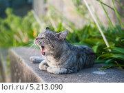 Кот зевает. Стоковое фото, фотограф Надежда Бобкова / Фотобанк Лори