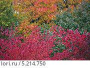 Осеннее разноцветье. Стоковое фото, фотограф Vladimir 'Seagull' Maksimov / Фотобанк Лори