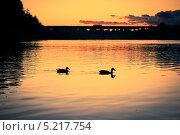 Утки плывут по реке на закате. Стоковое фото, фотограф Владислав Тропин / Фотобанк Лори