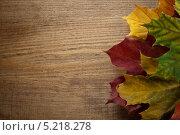 Осенние листья клёна на старом деревянном столе. Фон. Стоковое фото, фотограф Alioshin.aleksey / Фотобанк Лори