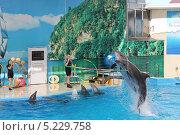 Купить «Дельфинарий», фото № 5229758, снято 23 мая 2013 г. (c) Иван Тимофеев / Фотобанк Лори