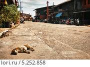 Купить «Бездомная собака лежит на улице Ko Lanta Island, Таиланд», фото № 5252858, снято 18 января 2012 г. (c) Петр Малышев / Фотобанк Лори