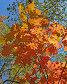 Яркие осенние листья дуба кленолистного на фоне голубого неба, фото № 5255674, снято 28 октября 2006 г. (c) Ирина Борсученко / Фотобанк Лори