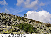 Купить «Каменная осыпь на склоне горы на Северном Урале», фото № 5255842, снято 9 августа 2012 г. (c) Денис Нечаев / Фотобанк Лори
