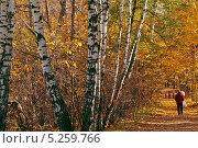 Золотая аллея. Стоковое фото, фотограф Дмитрий Перельман / Фотобанк Лори
