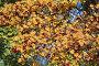 Ягоды боярышника осенью, эксклюзивное фото № 5263462, снято 15 октября 2013 г. (c) Алексей Гусев / Фотобанк Лори