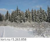 Зима. Стоковое фото, фотограф Успенская Лидия Валентиновна / Фотобанк Лори