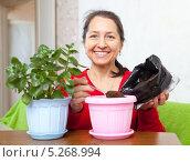 Пожилая женщина пересаживает комнатный цветок в другой горшок. Стоковое фото, фотограф Яков Филимонов / Фотобанк Лори
