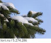 Купить «Сосновая ветка с небольшой снежной рыхлой шапочкой», фото № 5274286, снято 12 марта 2013 г. (c) Людмила Жмурина / Фотобанк Лори