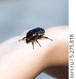 Купить «Черный жук ползет по руке», фото № 5275818, снято 3 июля 2013 г. (c) Евгений Ткачёв / Фотобанк Лори
