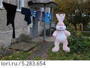 Розовый заяц сушится на верёвке. Стоковое фото, фотограф Евгений Волвенко / Фотобанк Лори