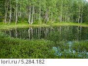 Отражение березовой рощи в пруду. Стоковое фото, фотограф Анастасия Ефремова / Фотобанк Лори