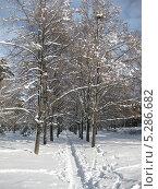 Зимняя тропинка. Стоковое фото, фотограф Склярова Ирина / Фотобанк Лори