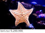 Морская звезда. Стоковое фото, фотограф Рогов Алексей / Фотобанк Лори