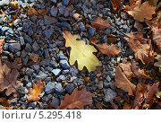 Опавшие дубовые листья. Стоковое фото, фотограф Алексей Шуляков / Фотобанк Лори