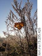Утренний иней на осеннем листе в сухой траве. Стоковое фото, фотограф Алексей Шуляков / Фотобанк Лори