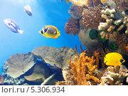 Купить «Тропические рыбы над коралловым рифом», фото № 5306934, снято 27 мая 2018 г. (c) Яков Филимонов / Фотобанк Лори
