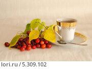 Купить «Чай с боярышником», фото № 5309102, снято 8 ноября 2013 г. (c) Александр Власов / Фотобанк Лори
