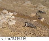 Купить «Погибшая птица на берегу Мертвого моря, Израиль», фото № 5310186, снято 7 октября 2012 г. (c) Ирина Борсученко / Фотобанк Лори