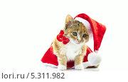 Купить «Милый котенок сидит в шапке Санта-Клауса», видеоролик № 5311982, снято 26 ноября 2013 г. (c) Серёга / Фотобанк Лори