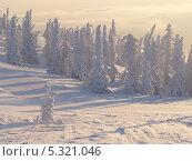 Ели в снегу. Стоковое фото, фотограф Пашка Харлов / Фотобанк Лори