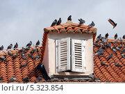 Купить «Дубровник. Крыша старого дома», эксклюзивное фото № 5323854, снято 20 сентября 2012 г. (c) Svet / Фотобанк Лори