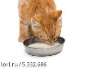 Купить «Маленький рыжий полосатый котенок лакает молоко из миски, на белом фоне», фото № 5332686, снято 29 сентября 2013 г. (c) Okssi / Фотобанк Лори