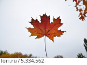 Красный кленовый лист на фоне неба. Стоковое фото, фотограф ВЛАДИМИР КУШПИЛЬ / Фотобанк Лори