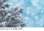 Купить «Ветки сосны в инее на голубом фоне с эффектом боке и снежинками», фото № 5338374, снято 6 августа 2020 г. (c) Светлана Ильева (Иванова) / Фотобанк Лори