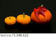 Купить «Три спелые тыквы на черном столе», фото № 5348622, снято 30 октября 2013 г. (c) Morgenstjerne / Фотобанк Лори